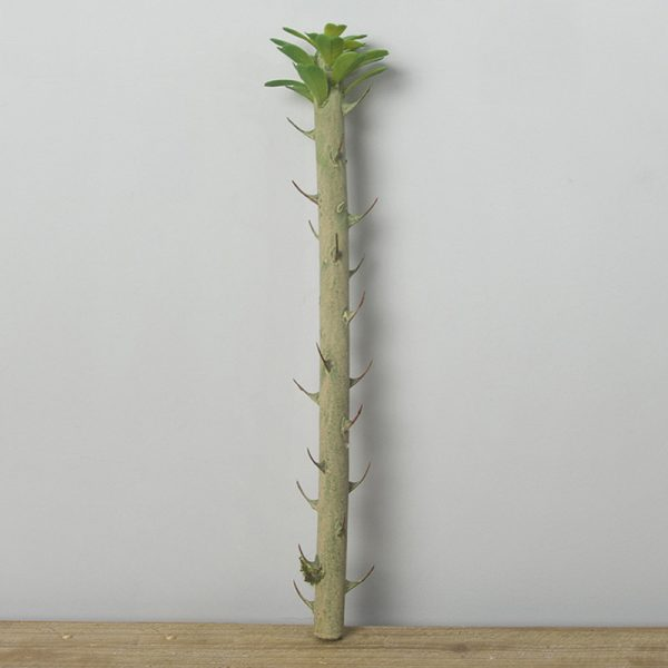 cành xương rồng bonsai giả 50cm