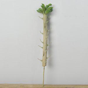 cành xương rồng bonsai giả 35cm