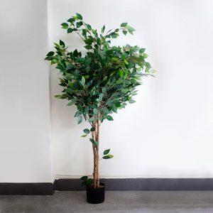 cây đa thân gỗ giả